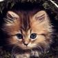 natalya84i аватар