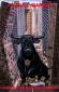bullmarket аватар